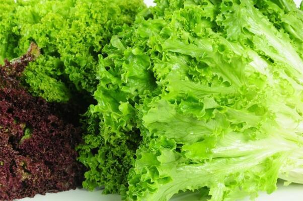 Marul - 100 gramı 14 kalori