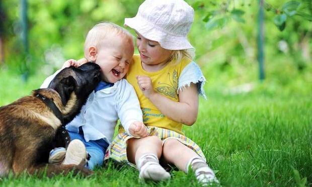 Masör köpek bebeğe masaj yapıyor