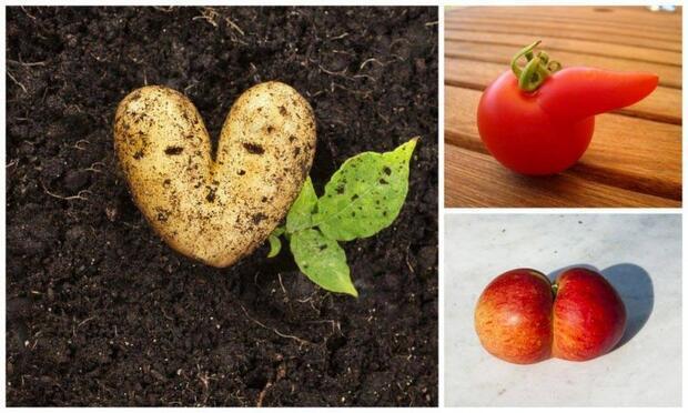 En çok domates, elma ve patateste hormon kullanılıyor