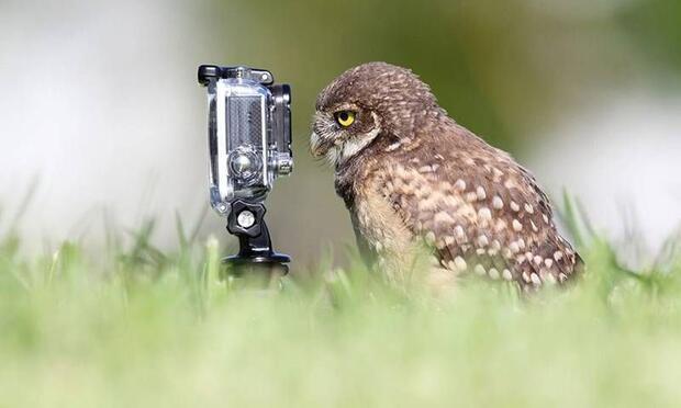 Fotoğrafçı hayvanlar