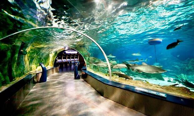 Bayram'da rengarenk su altı dünyası sizleri bekliyor!