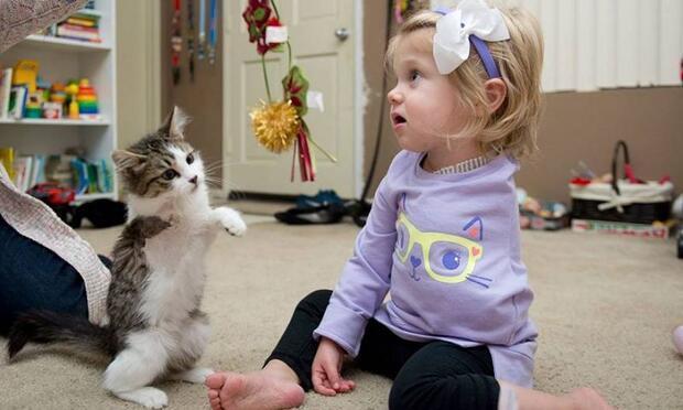 Kolu kesilen sevimli kızla 3 ayaklı kedinin dostluğu