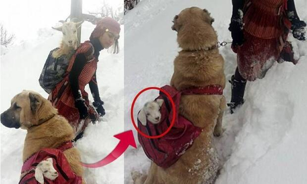 Sosyal medyada en çok paylaşılan fotoğrafın sırrı!