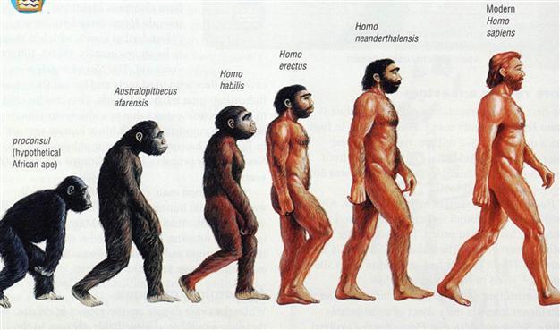 turkish state science council denies evolution censor