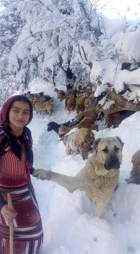 The story behind heart-warming photograph of shepherd girl in Turkey's Rize