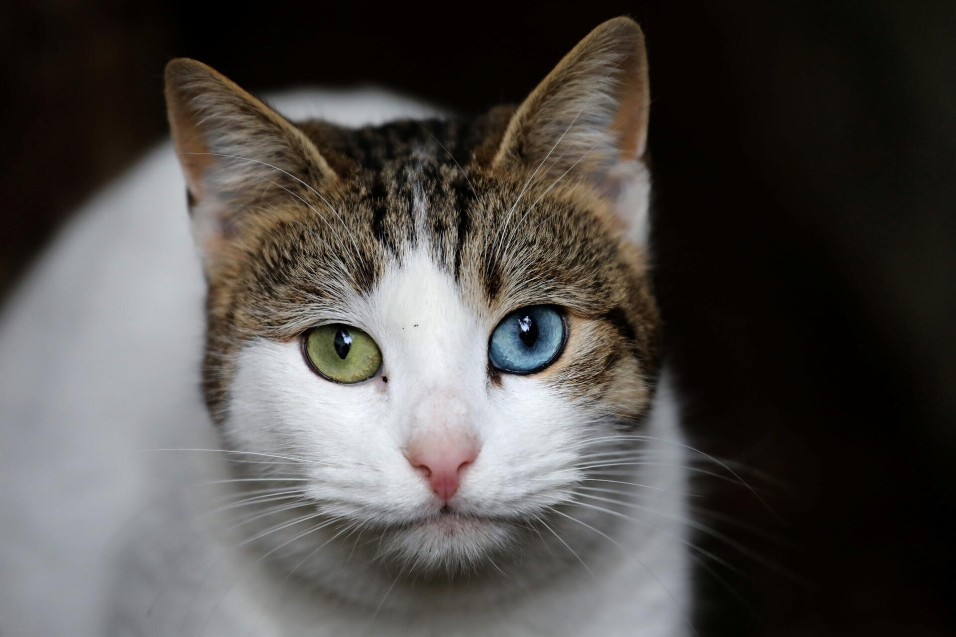 Cat Food Tina