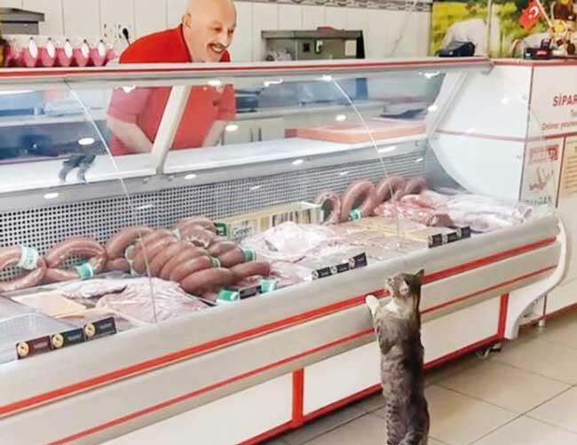 Cat Waits in Line at Butcher Shop