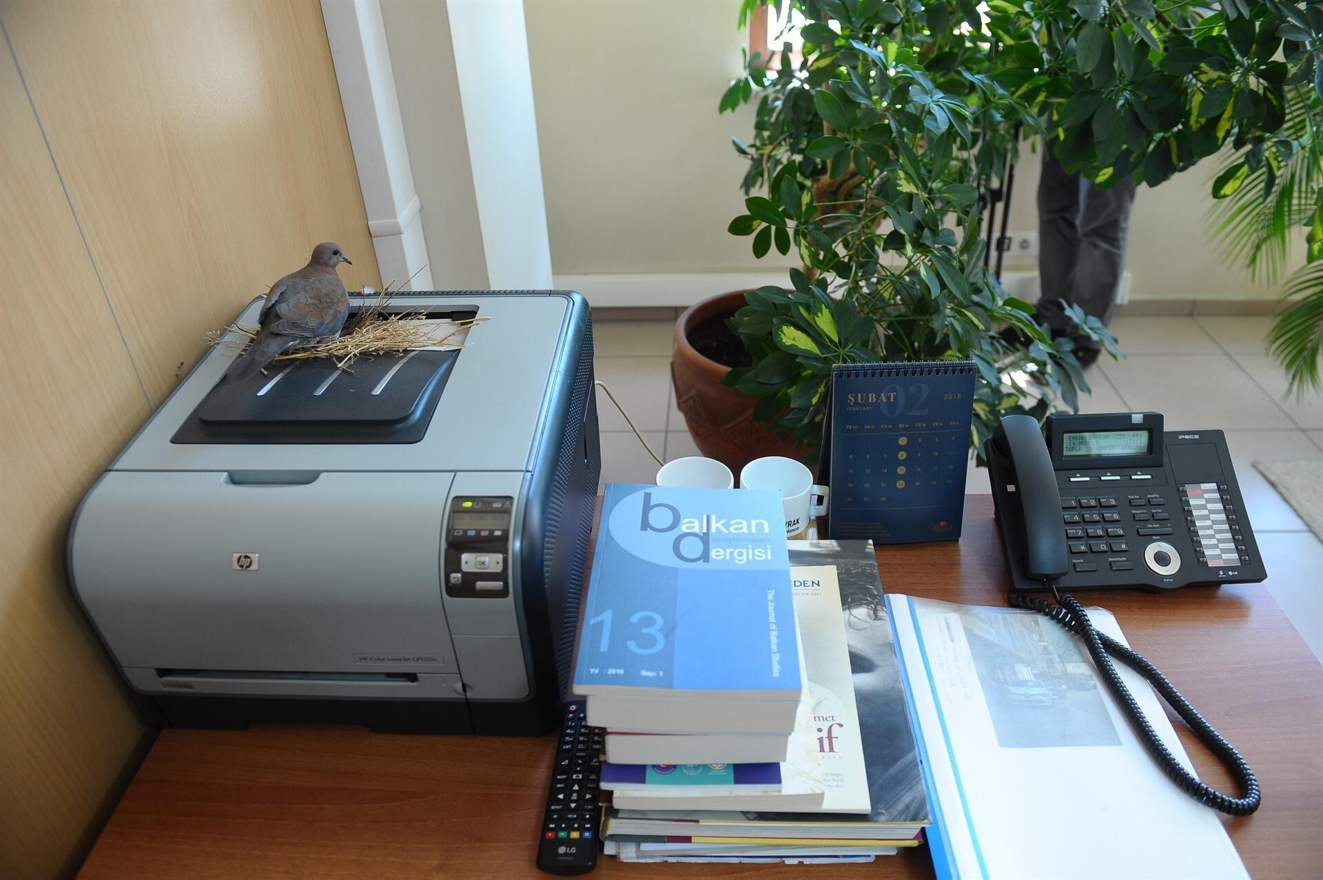 Image result for Doves build nest on printer in Bursa mayor's Office