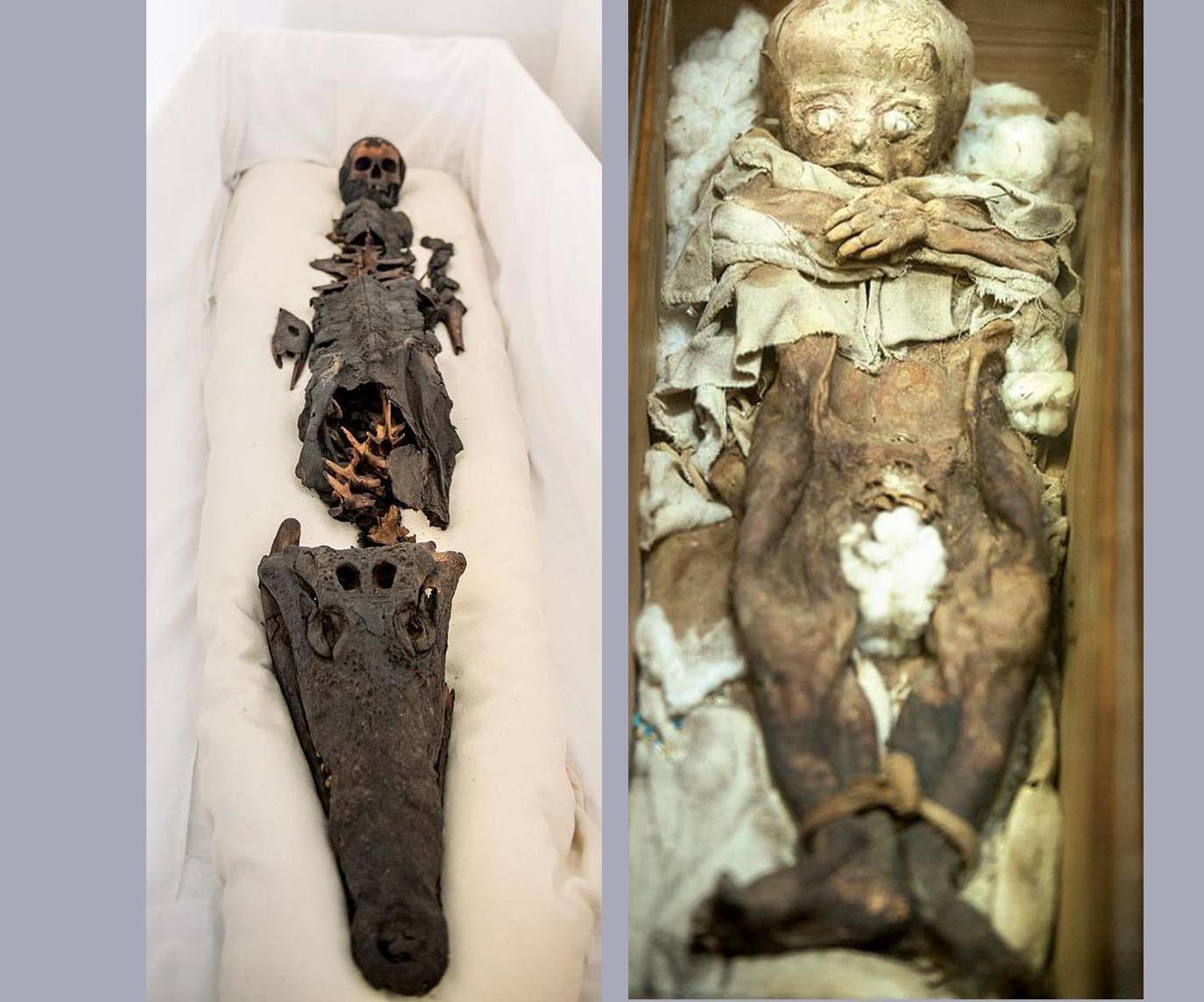 traces of tuberculosis found in mummies of egypt Over the years, scientists have found evidence of cancers, heart disease, starvation, ulcers, smallpox, tuberculosis and other infections in ancient remains from all over the world.