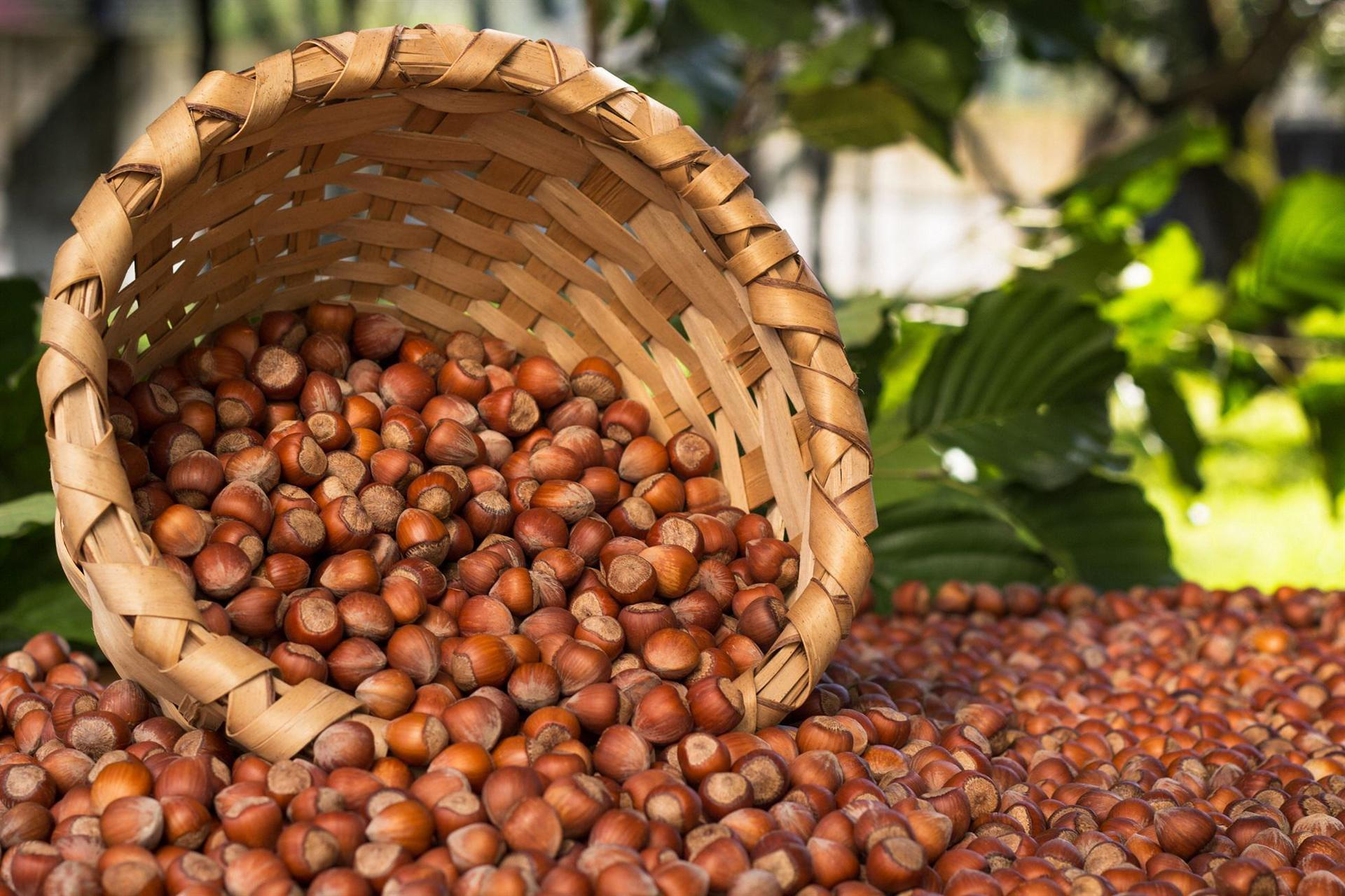 Turkey earns nearly $1 8 bln in hazelnut exports during season