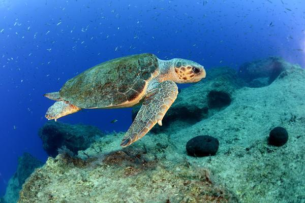 Festival delayed to protect sea turtles in Mersin