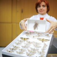 Ankara museum home to 60,000 insects