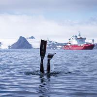 Turkish record holder diver Şahika Ercümen dives into icy Antarctic waters