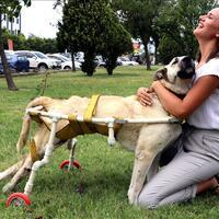 Dog takes first steps with new wheels - Turkey News