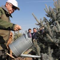 Turkey plants 11 million saplings for greener future - Turkey News