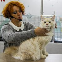 Fair hosts thousands of cats