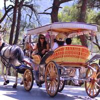 Istanbul Municipality expropriates horse-drawn carriages on Princes' Islands