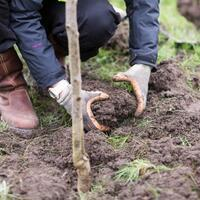 Gov't aims to plant 82 million saplings until November