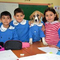 Rescued puppy attends classes in village school dressed in uniform