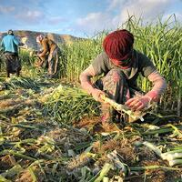 Gender gap among farm workers narrows slowly