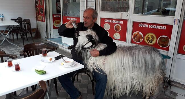 Goat attacked by dog during breakfast at Istanbul cafe