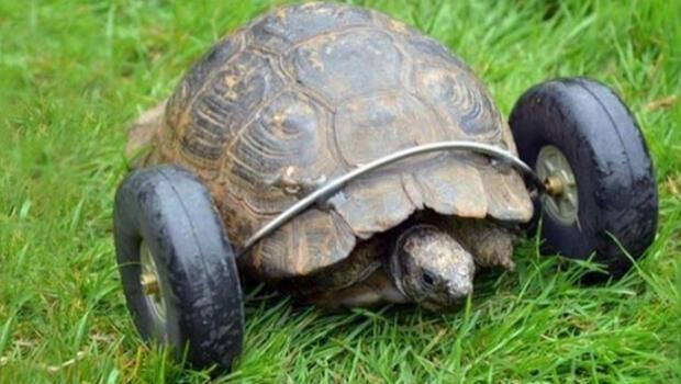 Kaplumbağaya Mühendislik Harikası Magazin Haberleri