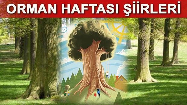 Orman haftası şiirleri etkinliklere değer katacak!