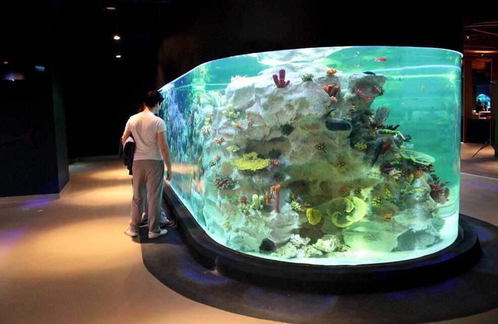 İstanbul un popüler sualtı hayvanat bahçesi yaz günlerinde serinletiyor