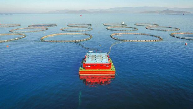 Kültür balıkçılığında ihracat 1 milyar dolara dayandı