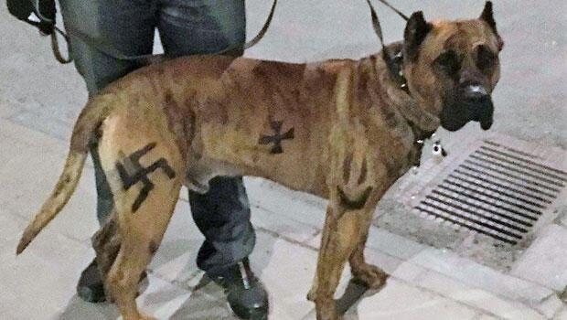 STOCKHOLM Bölge Mahkemesinden yapılan açıklamada, geçen yıl köpeğinin üzerine boyayla