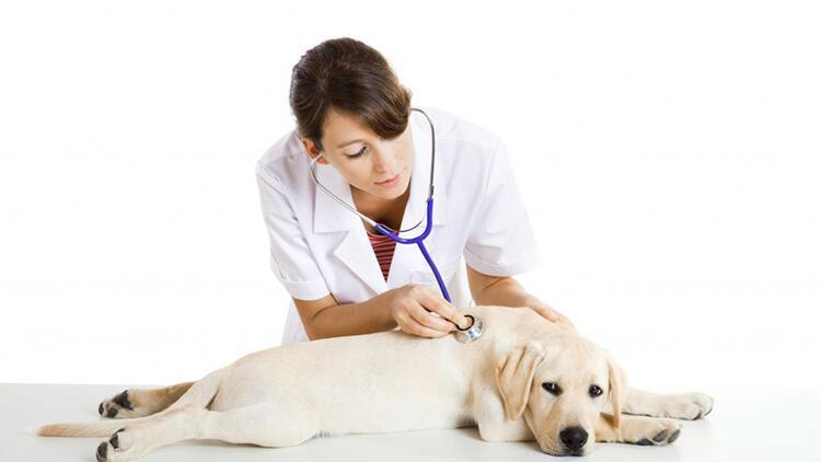 veteriner ile ilgili görsel sonucu