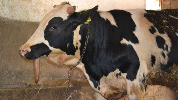 Manisa'nın Saruhanlı ilçesinde, doğum sırasında çenesini kaybeden ve beslenme sorunu