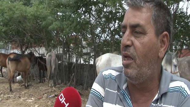 Kartal Yunus Mahallesi`ndeki boş bir arazideki atları görenler belediyeye şikayette