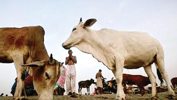 Hindular, inek yüzünden Müslüman adamı linç etti