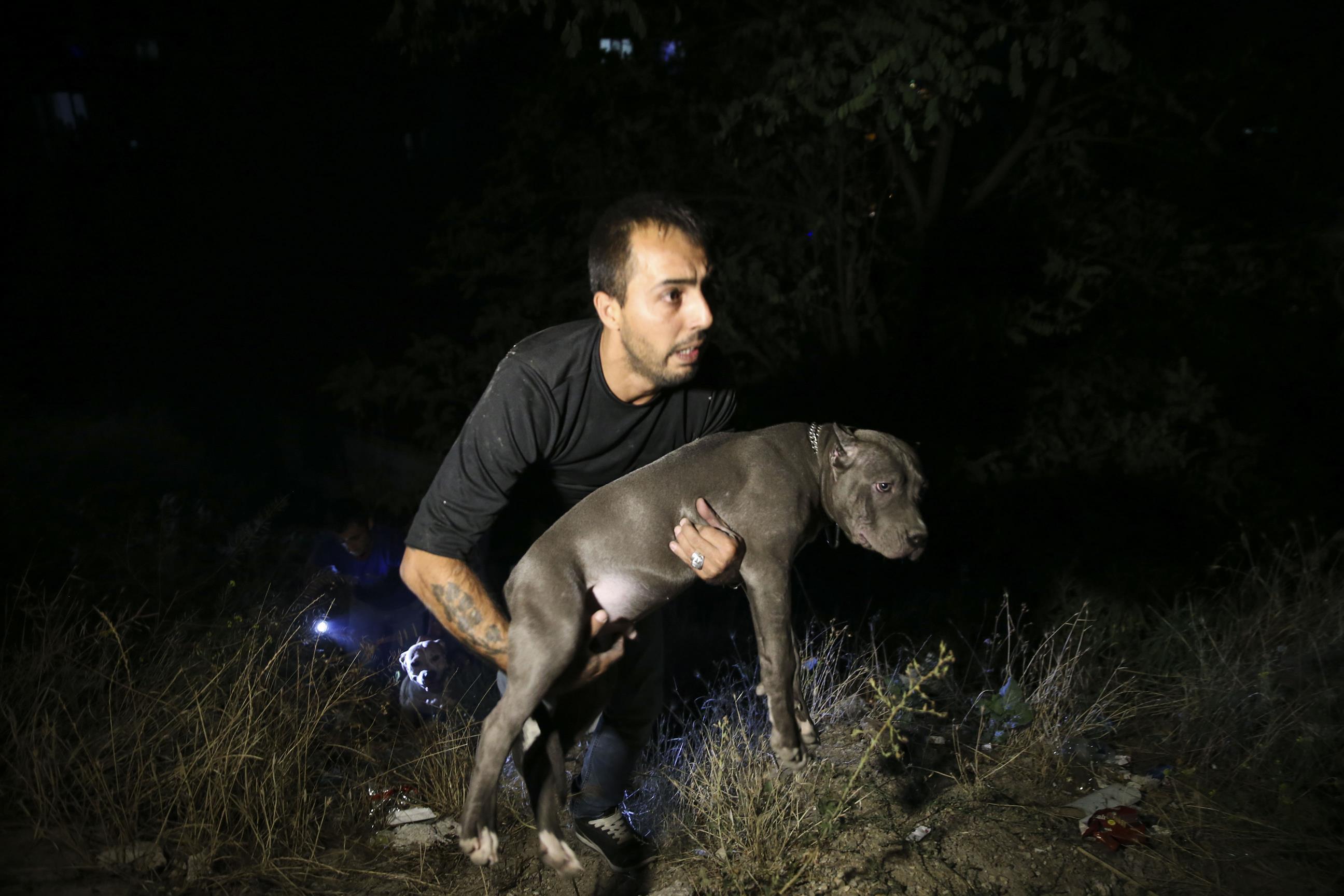 Alevlerin arasında mahsur kalan üç köpek son anda kurtarıldı. Ayvalı