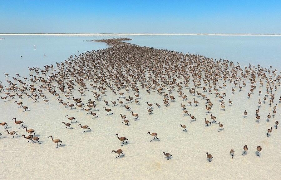 Türkiye'nin Flamingo cennetine turist akını