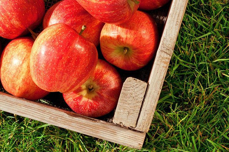Her şey mevsiminde güzel! İşte ay ay sebze meyve takvimi...