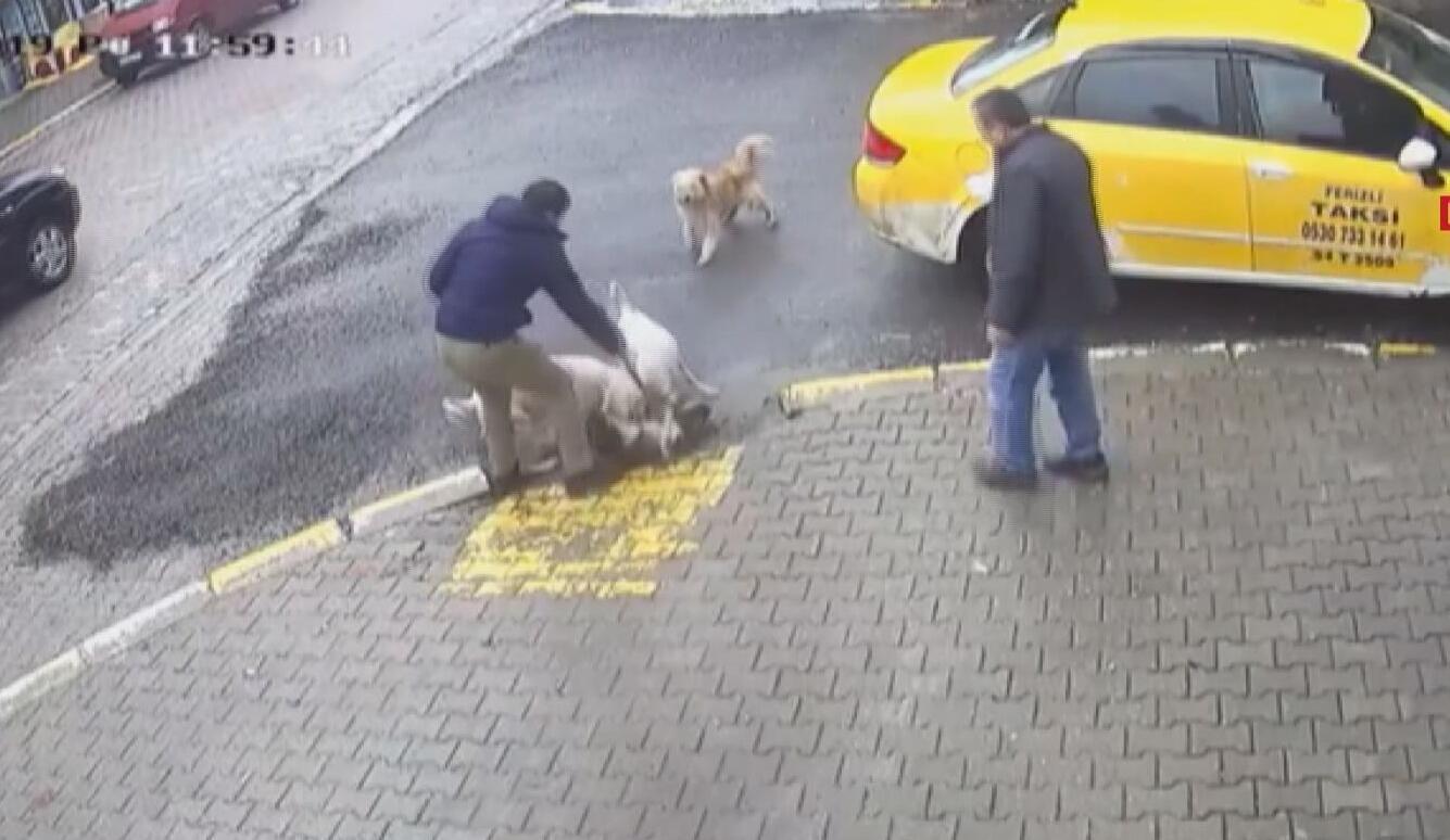 Ferizli Haberleri: Sakaryada iki pitbullun saldırdığı sokak köpeği ağır yaralı 44