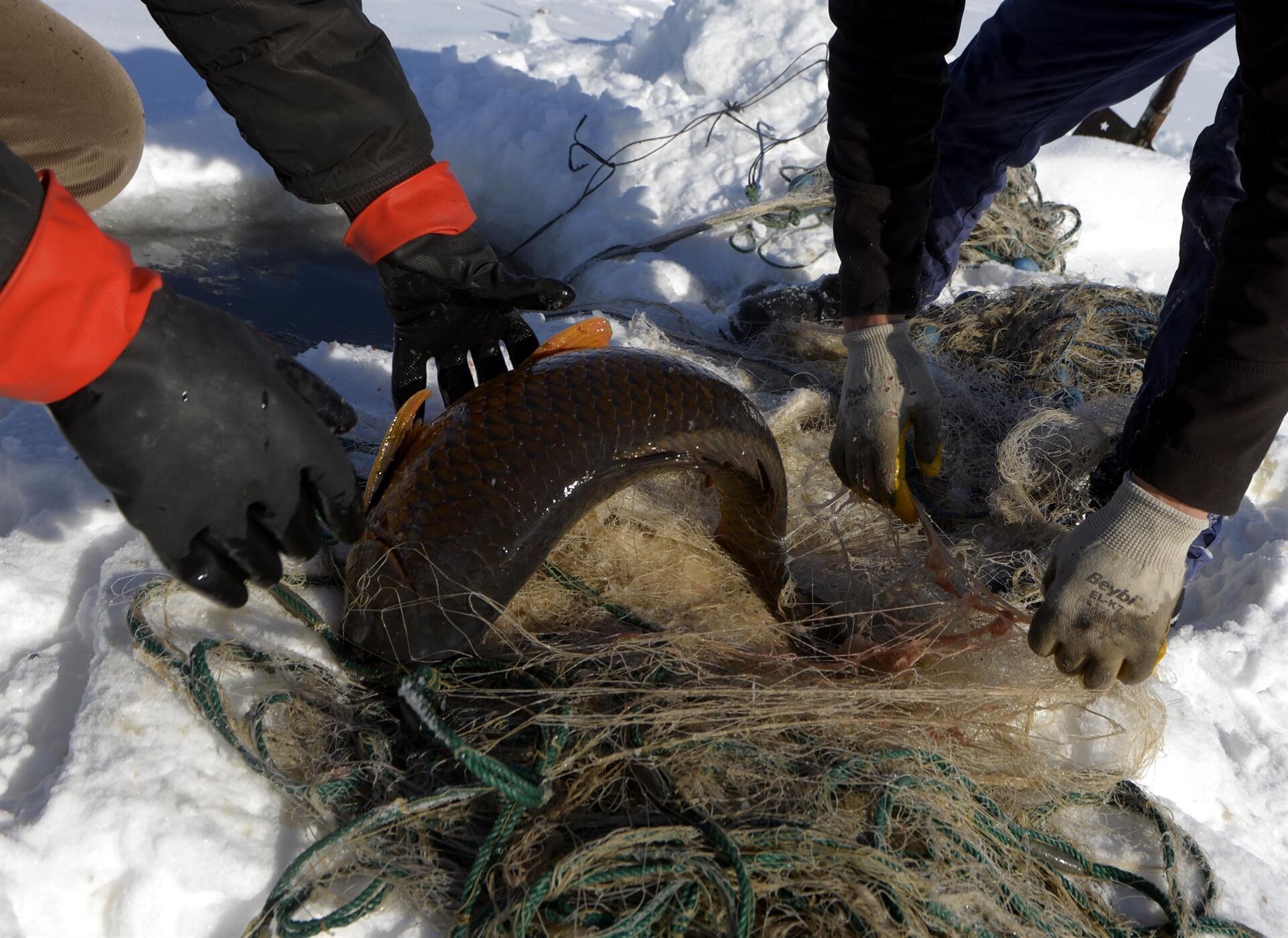 20 yıldır Eskimo usulü yapıyor! Çıldır Gölü'nden en büyüğünü yakaladı