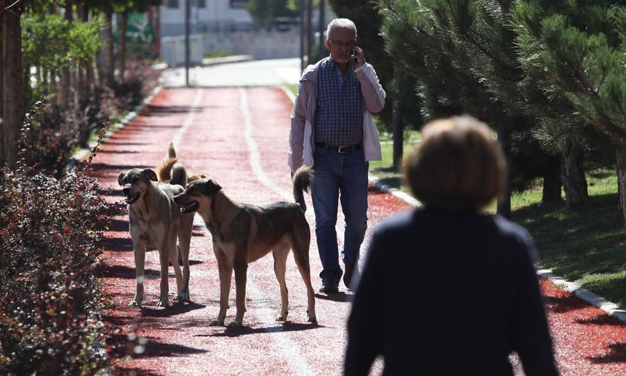 Sokak hayvanları için zirve önerisi