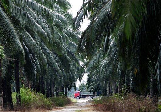 Dünyada 2018'de 12 milyon hektar ormanlık alan yok oldu