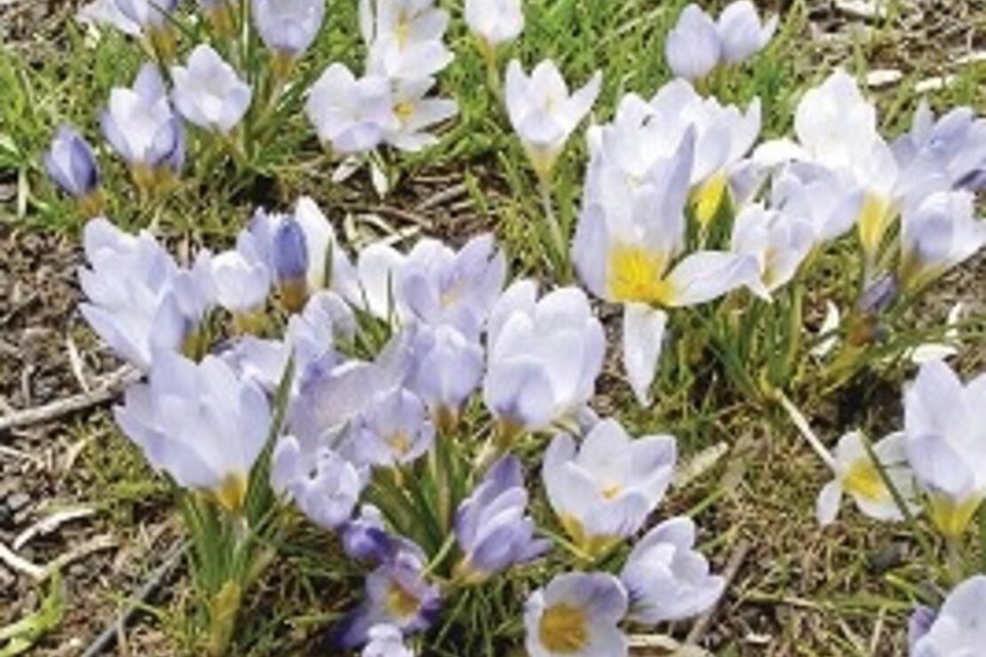 40688b018cc42 Zirvenin çiçekleri - Seyahat Haberleri