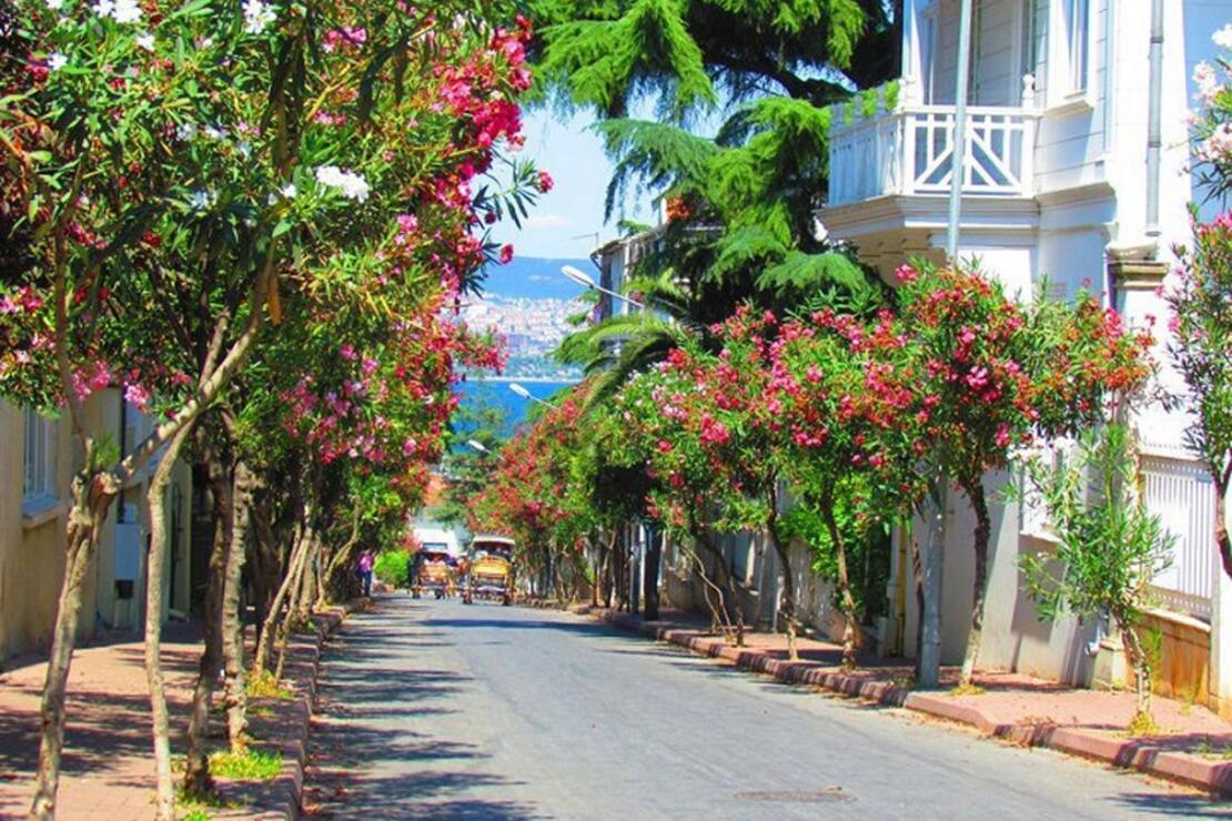 Image result for büyük ada
