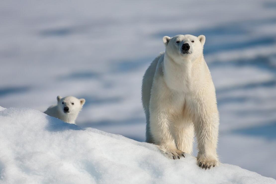 Dünyanın sıra dışı hayvanları - dünyadaki kaç tanesi beyaz