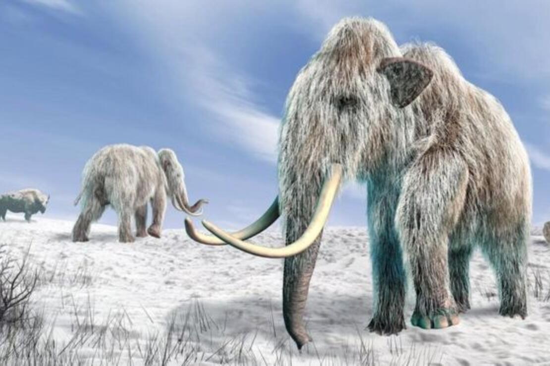 Dünyanın En Zengin 5 Hayvanı