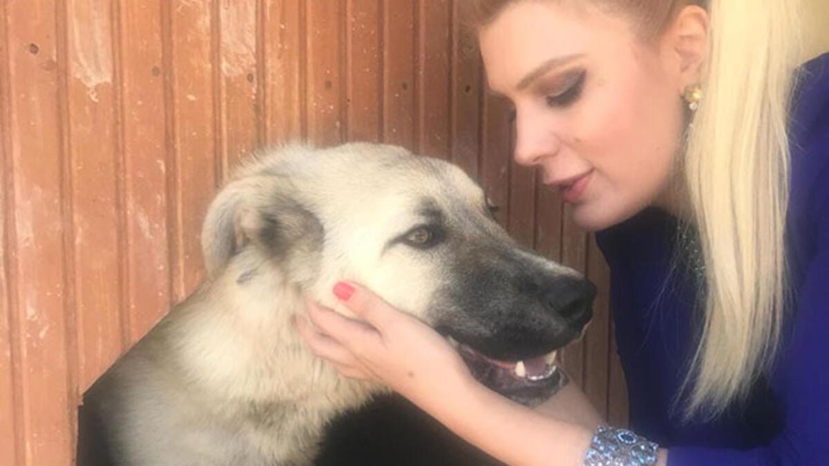 Çekicinin Arkasına Bağlanarak Sürüklenen Köpeğe Avukat Sahip Çıktı ile ilgili görsel sonucu