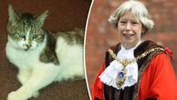 İngiltere'de belediye bir kedi için özel oturum düzenliyor