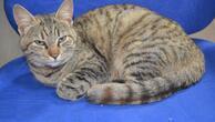 Kedi Minnoşun 4 günlük metro mecerası