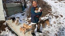 Güney Koreli yaşlı kadın köpeklerin kahramanı oldu