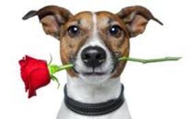 Dişi Köpek Mi Erkek Köpek Mi Yerel Haberler